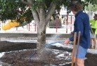Alice Springs Arborist 7old