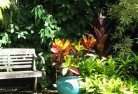 Alice Springs Tropical landscaping 11