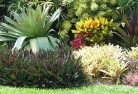 Alice Springs Tropical landscaping 9